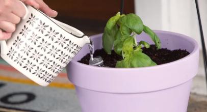 3 triky na DIY samozavlažování rostlin (video)