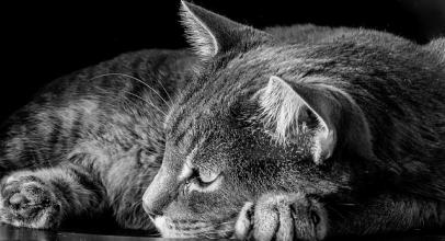 Kočky útočí! Propadnete i vy bláznivému kočičímu nábytku?