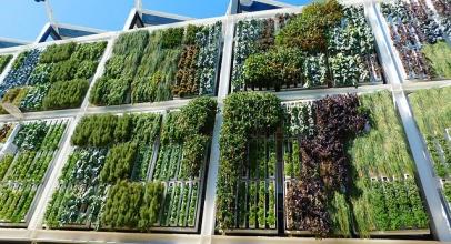 Přineste zeleň do města. Vertikální zahrady mohou v budoucnosti vyřešit problém s nedostatkem jídla