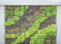 Vertikální zahrada do bytu se těší stále větší oblibě